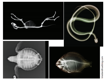 Рентген животных.