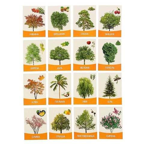 """Обучающие карточки """"Деревья и кустарники"""" 16 шт."""