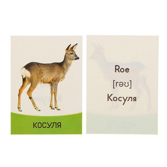 карточки Домана животные
