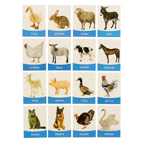 """Обучающие карточки """"Домашние животные и птицы"""" 16 шт."""