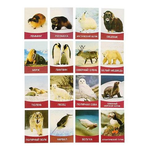 """Обучающие карточки """"Животные Севера"""" 16 шт."""