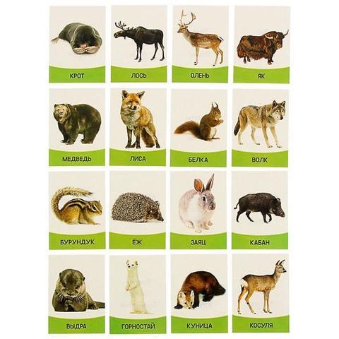 """Обучающие карточки """"Дикие Животные"""" 16 шт."""