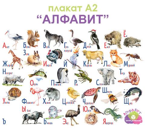Плакат детский развивающий «Алфавит» ламинированный, А2 2